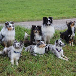 Belle und ihre Kinder Cheeky,Enzo,Gatsby,Choker,Iago(hinten)-Ilay,Belle,Ixy(vorne)
