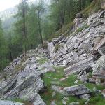 ... sentiero per l'Alp di Fora