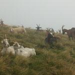 Sul Monte Calbiga .....