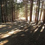 Nel bosco sopra i Monti Marcalone 860 m