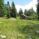 Il sentiero per Piöv di Dent passa sulla sinistra della foto tra i due larici, non è quello più evidente e marcato rosso-bianco che passa a destra del masso.