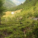 Sentiero per l'Alp de Calvaresc-Desora