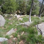 Qui ci sarà il nuovo sentiero Alp de Martum - Martum