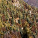 .... colori dell'autunno ...