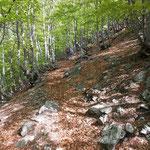 Sentiero Pian della Crosa - Alpe Bassa