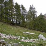 Sentiero Alp de Setaggié - Gamba in dent