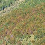 Il bosco si colora ......