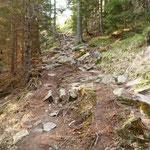 Sentiero per la Capanna Pian d'Alpe