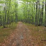 Sentiero per il Pian della Crosa