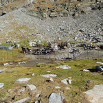 Alpe a 2400 m