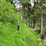 Sentiero per l'Alpe del Gualdo