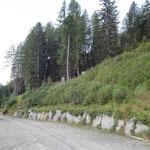 """Dalla strada a 1560 m entriamo nel """"Bosch de la Sciman"""""""