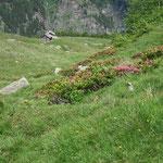 Alpe di Sceru 1968 m