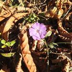 .... i primi fiori ....