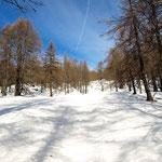 In salita vicino all'Alpe Pesced