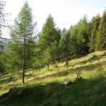 Sul sentiero per l'Alp de Cascinarsa