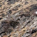 Monte del Corgell ........ al ritorno