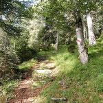 Sentiero Prepiantò - Alpe Martum