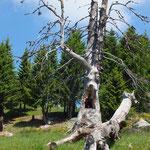 Alpe Girso 1552 m