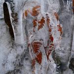 Foglie nella morsa del ghiaccio