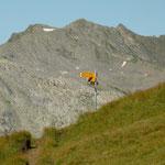 Passo di Gana Negra 2463 m