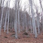Bosco ai Monti di Ravecchia