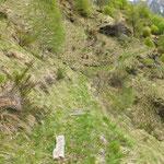 Sentiero per Monte