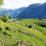 Alpe Càuri 1477 m
