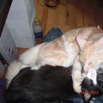 Whitney 7 Monate alt mit Xerxes 4,5 Monate alt