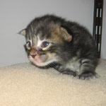 Dorian 2 Wochen alt