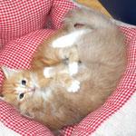 Fafnir 4 Wochen alt mit Elektra 8 Wochen alt