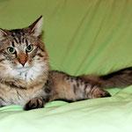Peppone 1,5 Jahre alt