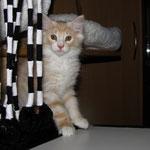 Yogi 10 Wochen alt