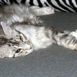 Metaxa 5 Monate alt