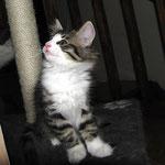 Violetta 8 Wochen alt