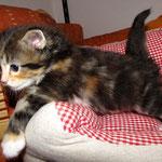 Yasmine 4 Wochen alt