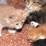Elektra_44 Tage alt mit Fafnir 16 Tage alt und Yasmine