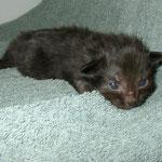 Banshee 2 Wochen alt