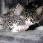 Figaro und Flint 4 Monate alt