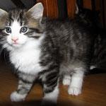 Violetta 6 Wochen alt