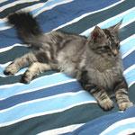 Maximus 4,5 Monate alt