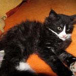 Orion 8 Wochen alt