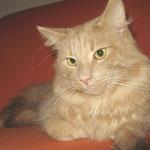 Pierroth 2 Jahre und 5 Monate alt