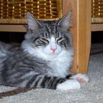Figaro 5 Monate alt
