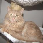 Pierroth 5,5 Jahre  alt