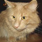 Pierroth 1 Jahr und 3 Monate alt