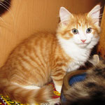 Tomcat 10 Wochen alt