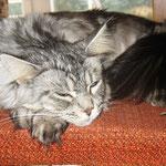 Metaxa und Maximus 10 Monate alt