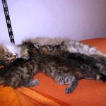 Amelie 7 Jahre und 9 Monate alt mit ihren P-Babies 6 Wochen alt