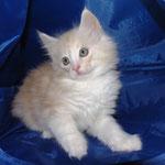Wallace 8 Wochen alt